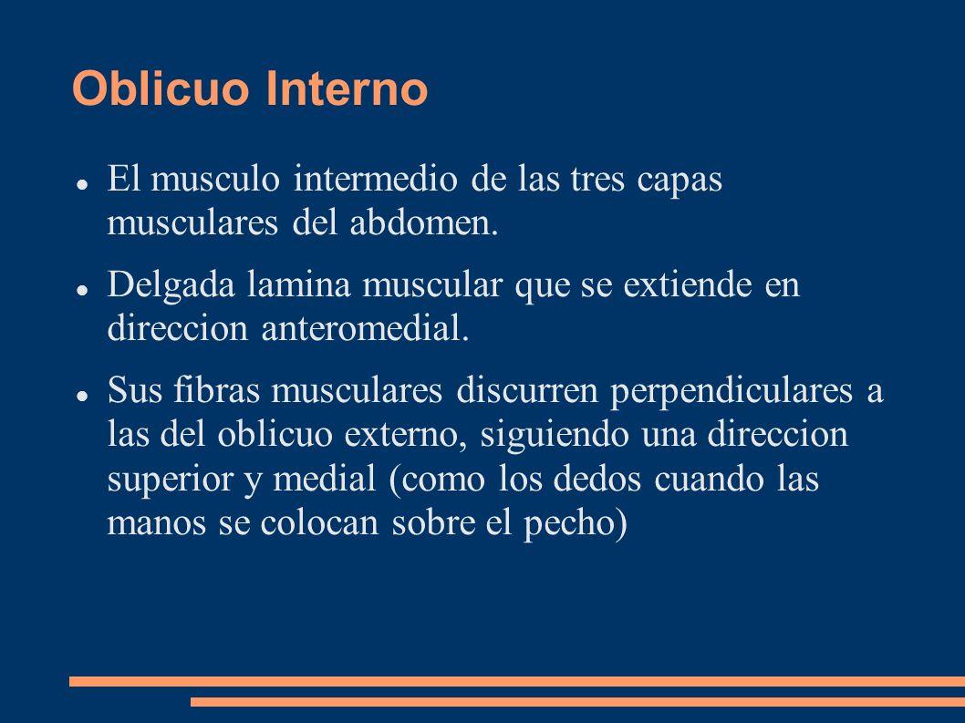 Oblicuo Interno El musculo intermedio de las tres capas musculares del abdomen. Delgada lamina muscular que se extiende en direccion anteromedial. Sus