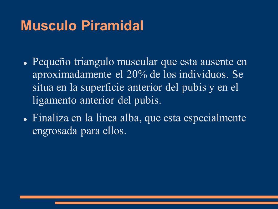 Musculo Piramidal Pequeño triangulo muscular que esta ausente en aproximadamente el 20% de los individuos. Se situa en la superficie anterior del pubi