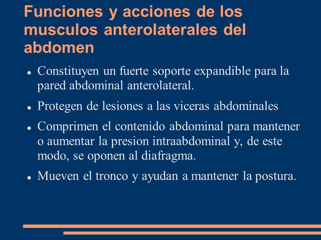 Funciones y acciones de los musculos anterolaterales del abdomen Constituyen un fuerte soporte expandible para la pared abdominal anterolateral. Prote