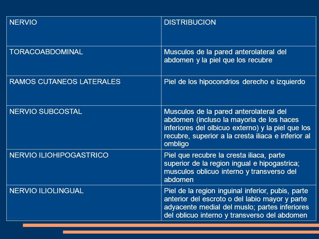 NERVIODISTRIBUCION TORACOABDOMINALMusculos de la pared anterolateral del abdomen y la piel que los recubre RAMOS CUTANEOS LATERALESPiel de los hipocon