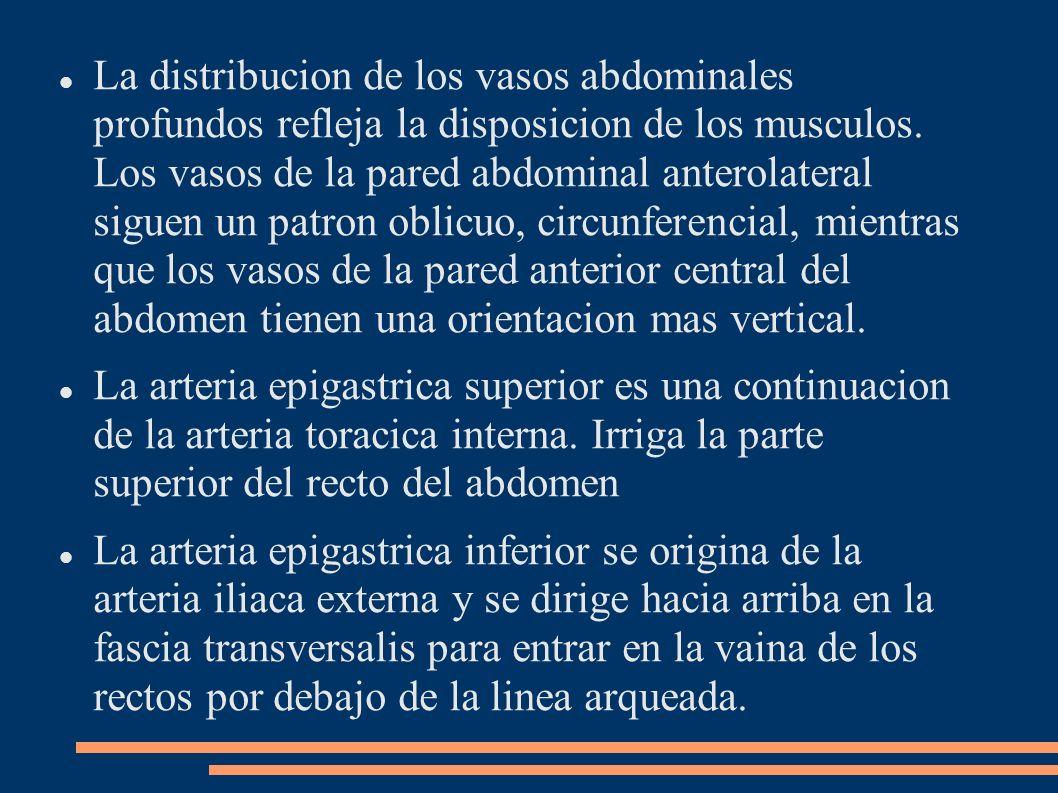 La distribucion de los vasos abdominales profundos refleja la disposicion de los musculos. Los vasos de la pared abdominal anterolateral siguen un pat