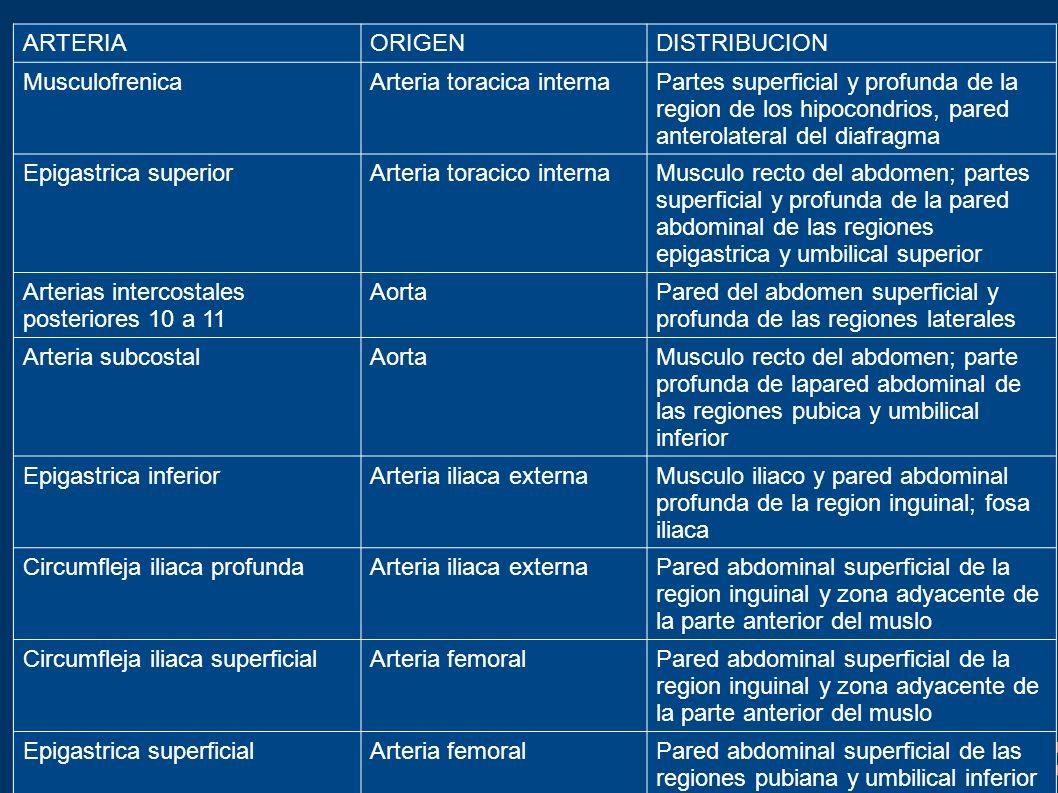 ARTERIAORIGENDISTRIBUCION MusculofrenicaArteria toracica internaPartes superficial y profunda de la region de los hipocondrios, pared anterolateral de