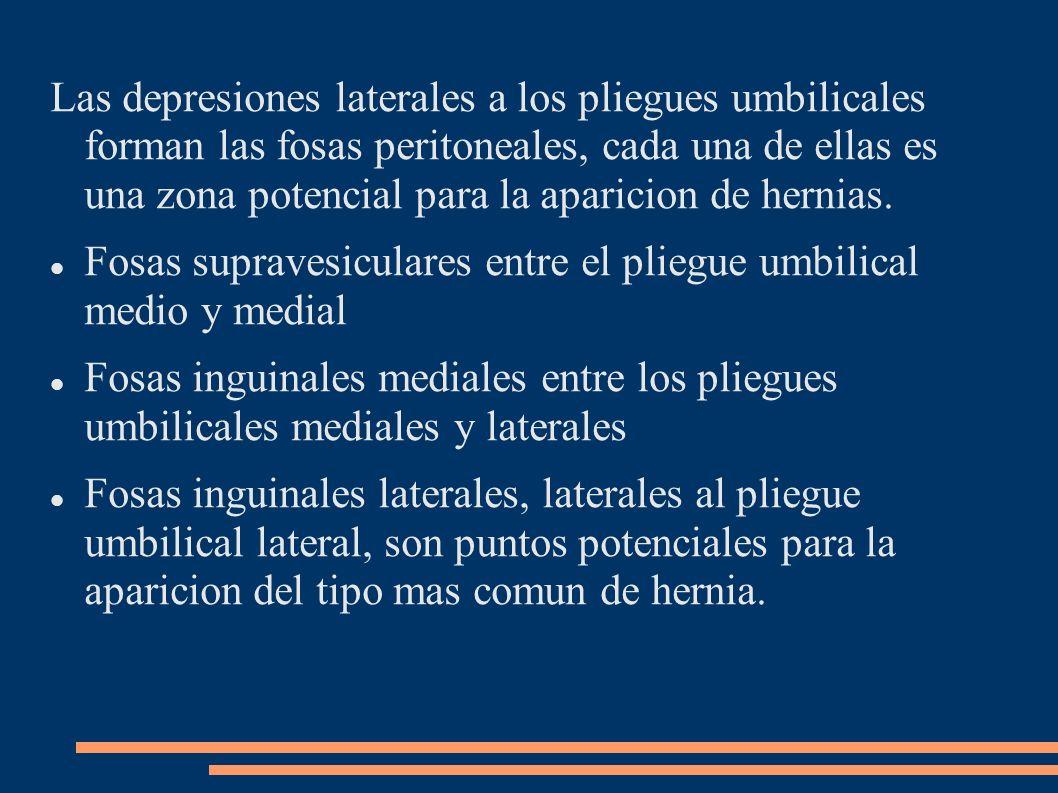 Las depresiones laterales a los pliegues umbilicales forman las fosas peritoneales, cada una de ellas es una zona potencial para la aparicion de herni