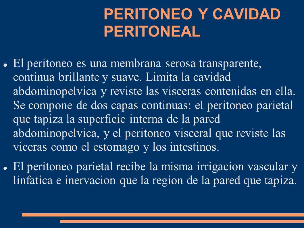 PERITONEO Y CAVIDAD PERITONEAL El peritoneo es una membrana serosa transparente, continua brillante y suave. Limita la cavidad abdominopelvica y revis