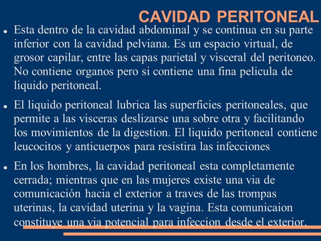 CAVIDAD PERITONEAL Esta dentro de la cavidad abdominal y se continua en su parte inferior con la cavidad pelviana. Es un espacio virtual, de grosor ca