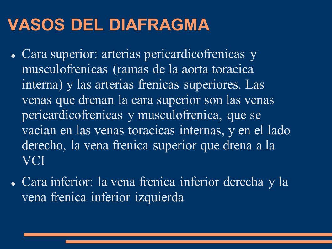 VASOS DEL DIAFRAGMA Cara superior: arterias pericardicofrenicas y musculofrenicas (ramas de la aorta toracica interna) y las arterias frenicas superio