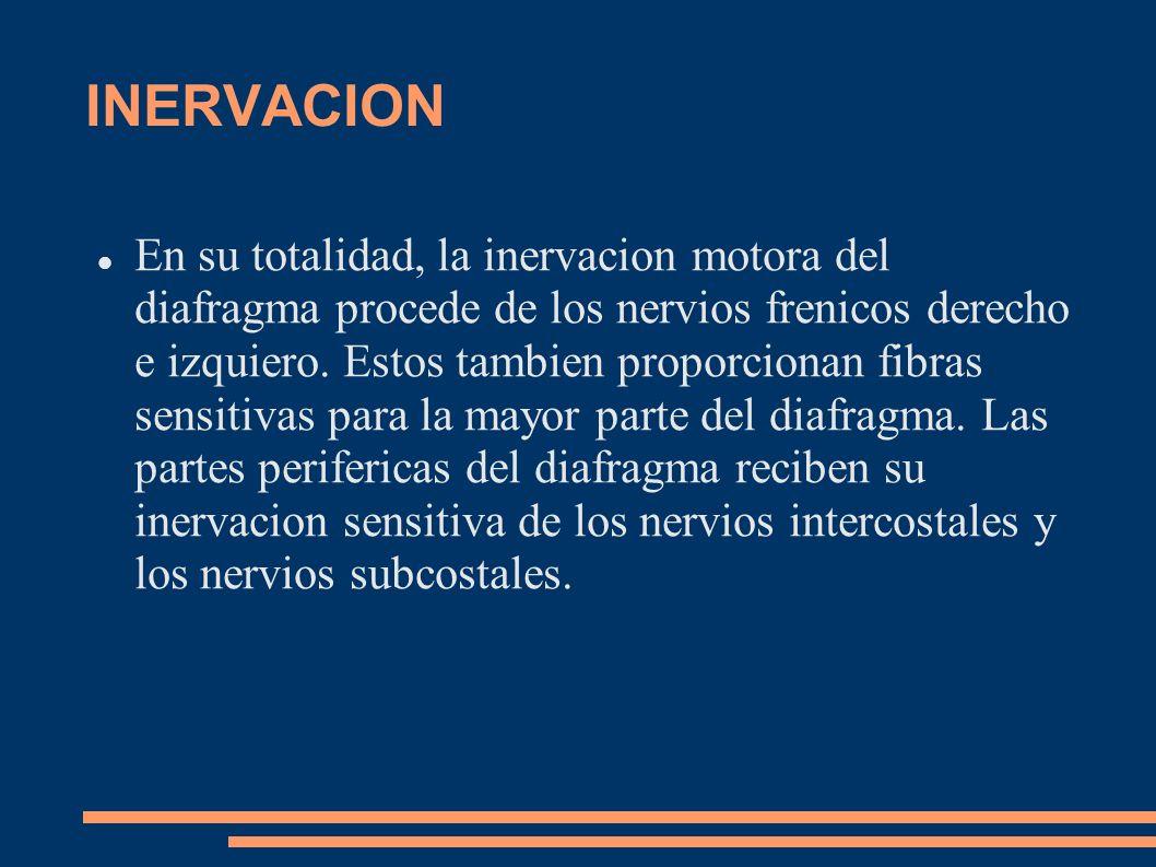 INERVACION En su totalidad, la inervacion motora del diafragma procede de los nervios frenicos derecho e izquiero. Estos tambien proporcionan fibras s