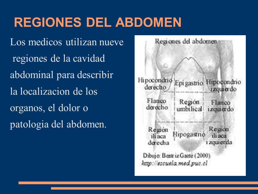 REGIONES DEL ABDOMEN Los medicos utilizan nueve regiones de la cavidad abdominal para describir la localizacion de los organos, el dolor o patologia d