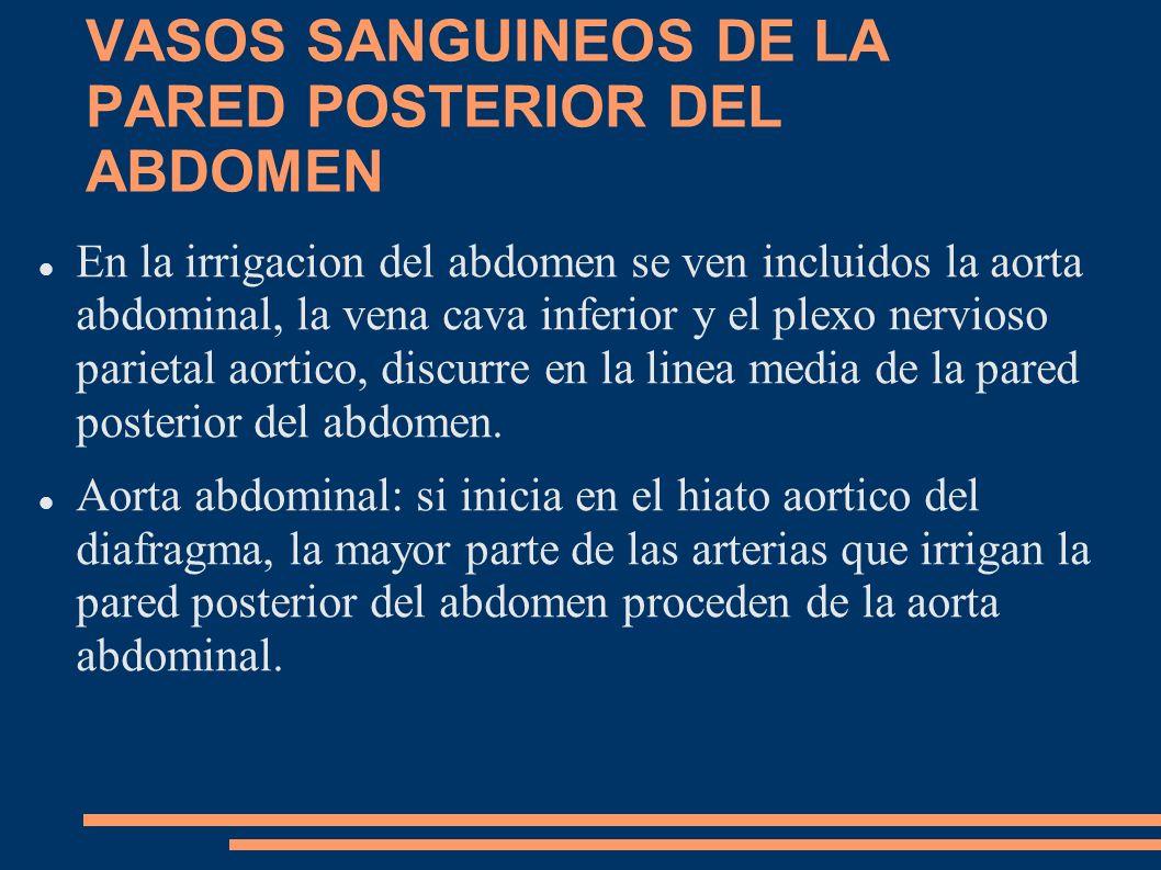VASOS SANGUINEOS DE LA PARED POSTERIOR DEL ABDOMEN En la irrigacion del abdomen se ven incluidos la aorta abdominal, la vena cava inferior y el plexo