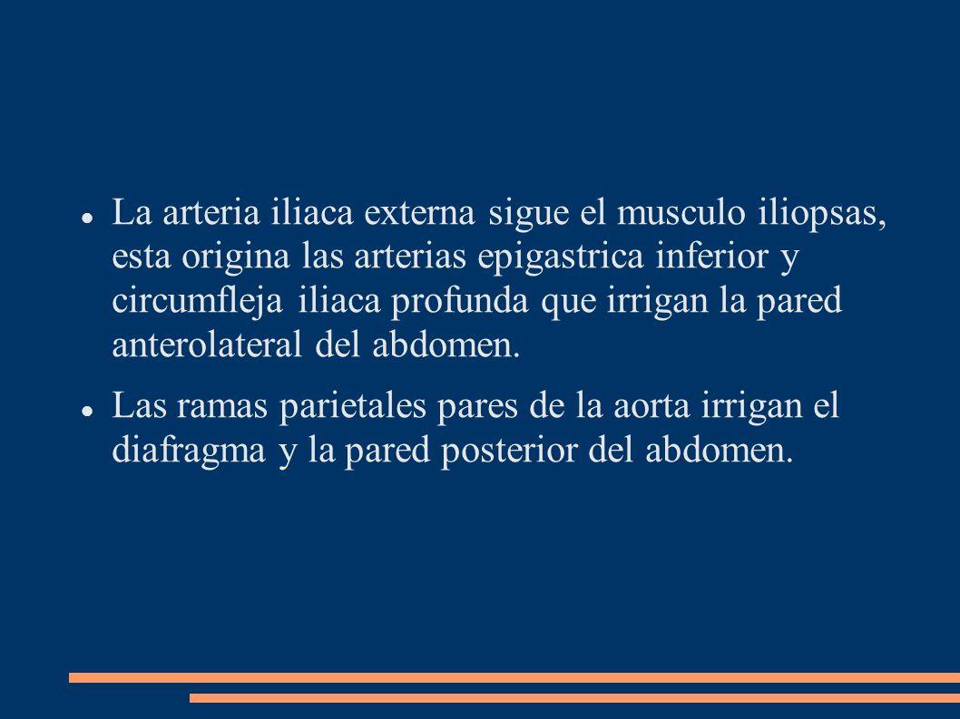 La arteria iliaca externa sigue el musculo iliopsas, esta origina las arterias epigastrica inferior y circumfleja iliaca profunda que irrigan la pared