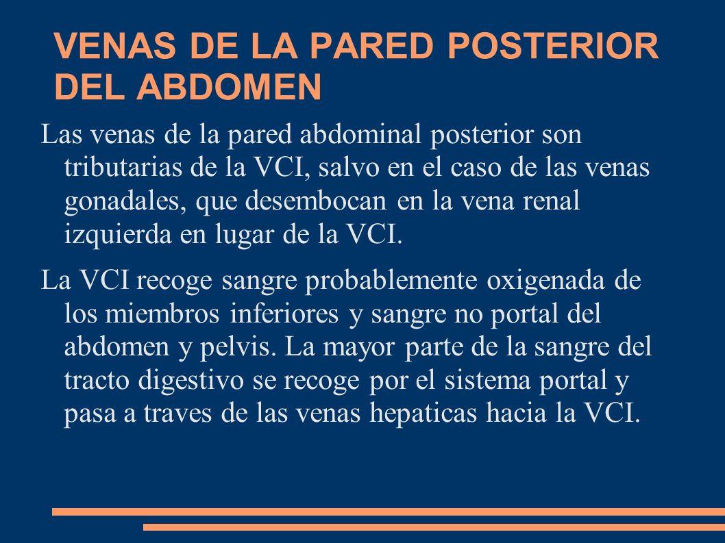 VENAS DE LA PARED POSTERIOR DEL ABDOMEN Las venas de la pared abdominal posterior son tributarias de la VCI, salvo en el caso de las venas gonadales,