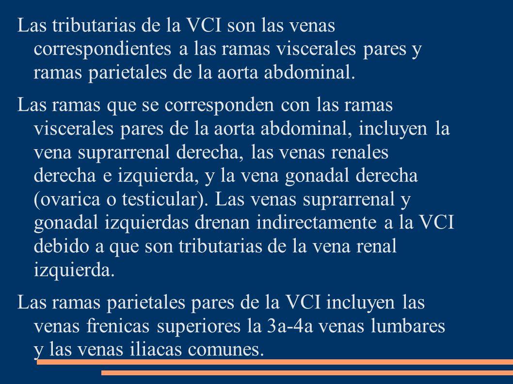 Las tributarias de la VCI son las venas correspondientes a las ramas viscerales pares y ramas parietales de la aorta abdominal. Las ramas que se corre