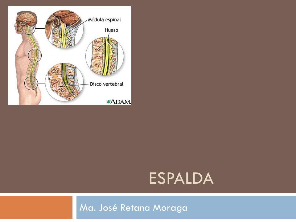Músculo cuadrado lumbar Músculo bien desarrollado que se extiende entre la 12° costilla, los procesos transversos lumbares y la cresta ilíaca.