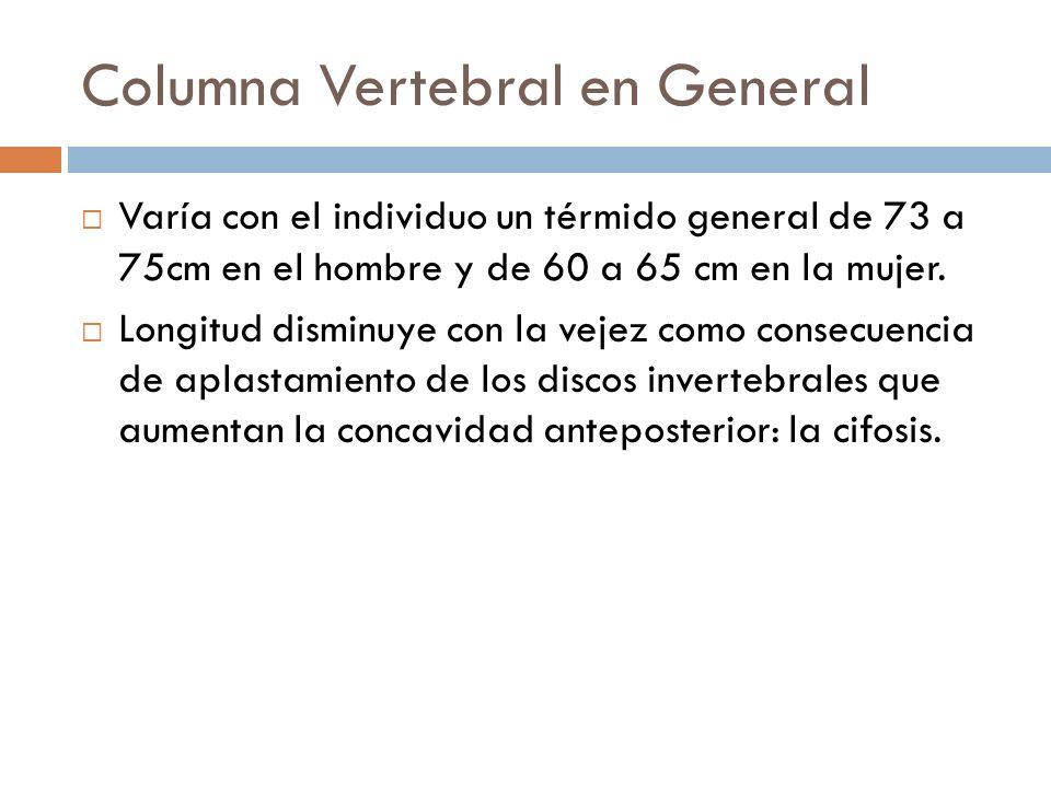Columna Vertebral en General Varía con el individuo un térmido general de 73 a 75cm en el hombre y de 60 a 65 cm en la mujer. Longitud disminuye con l