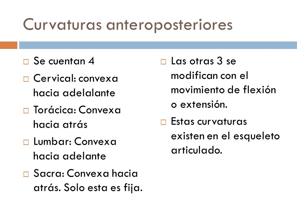 Curvaturas anteroposteriores Se cuentan 4 Cervical: convexa hacia adelalante Torácica: Convexa hacia atrás Lumbar: Convexa hacia adelante Sacra: Conve