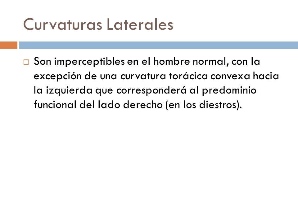 Curvaturas Laterales Son imperceptibles en el hombre normal, con la excepción de una curvatura torácica convexa hacia la izquierda que corresponderá a