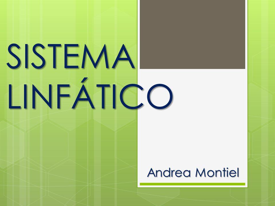 Andrea Montiel SISTEMA LINFÁTICO