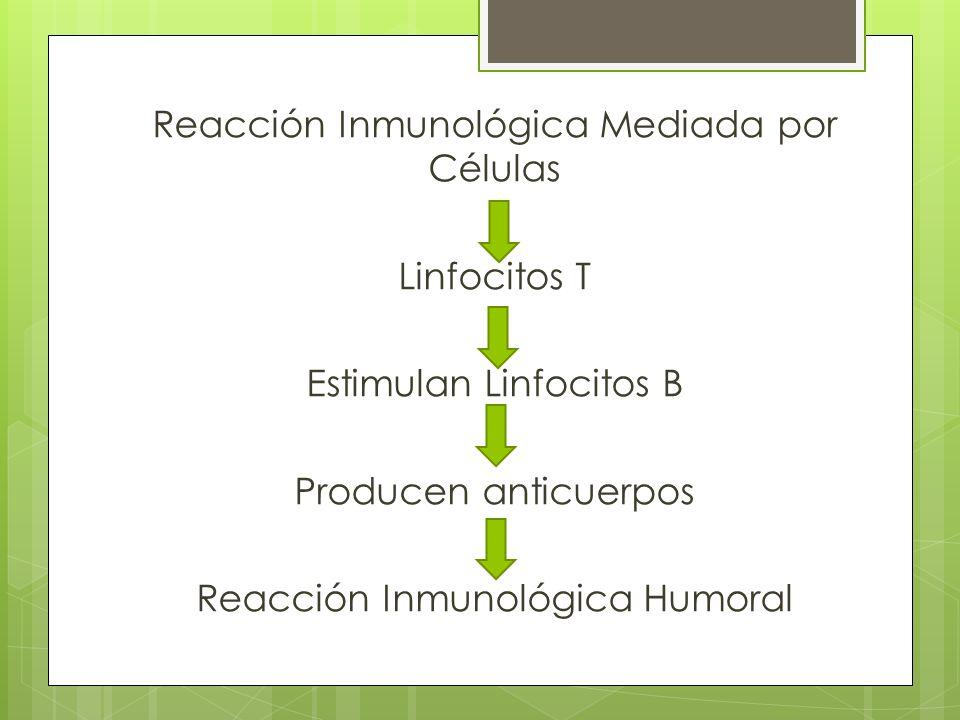 Reacción Inmunológica Mediada por Células Linfocitos T Estimulan Linfocitos B Producen anticuerpos Reacción Inmunológica Humoral