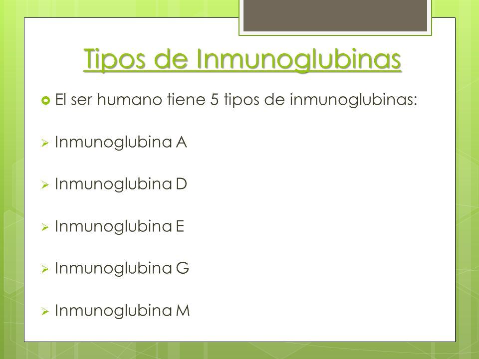 Tipos de Inmunoglubinas El ser humano tiene 5 tipos de inmunoglubinas: Inmunoglubina A Inmunoglubina D Inmunoglubina E Inmunoglubina G Inmunoglubina M