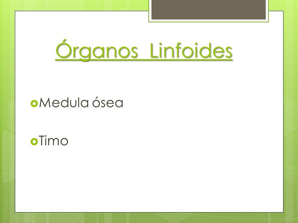 Órganos Linfoides Medula ósea Timo
