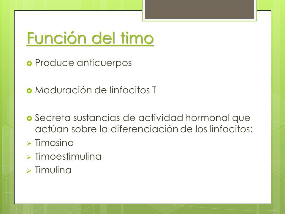 Función del timo Produce anticuerpos Maduración de linfocitos T Secreta sustancias de actividad hormonal que actúan sobre la diferenciación de los lin
