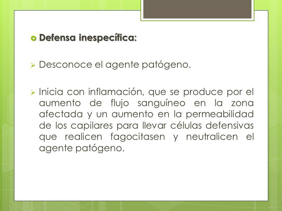 Defensa inespecífica: Defensa inespecífica: Desconoce el agente patógeno. Inicia con inflamación, que se produce por el aumento de flujo sanguíneo en