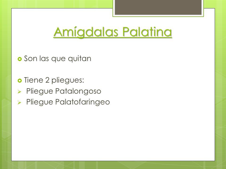 Amígdalas Palatina Son las que quitan Tiene 2 pliegues: Pliegue Patalongoso Pliegue Palatofaringeo