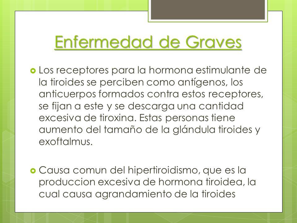 Enfermedad de Graves Los receptores para la hormona estimulante de la tiroides se perciben como antígenos, los anticuerpos formados contra estos recep