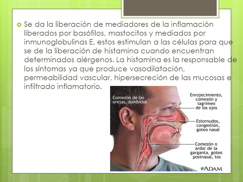Se da la liberación de mediadores de la inflamación liberados por basófilos, mastocitos y mediados por inmunoglobulinas E, estos estimulan a las célul