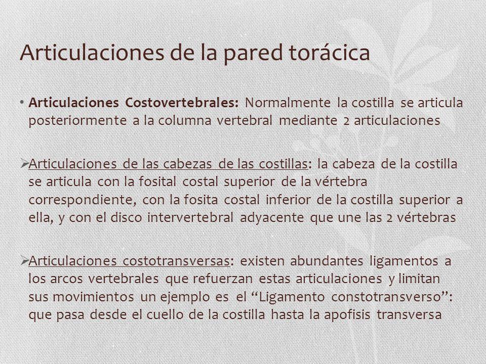 Articulaciones de la pared torácica Articulaciones Costovertebrales: Normalmente la costilla se articula posteriormente a la columna vertebral mediant