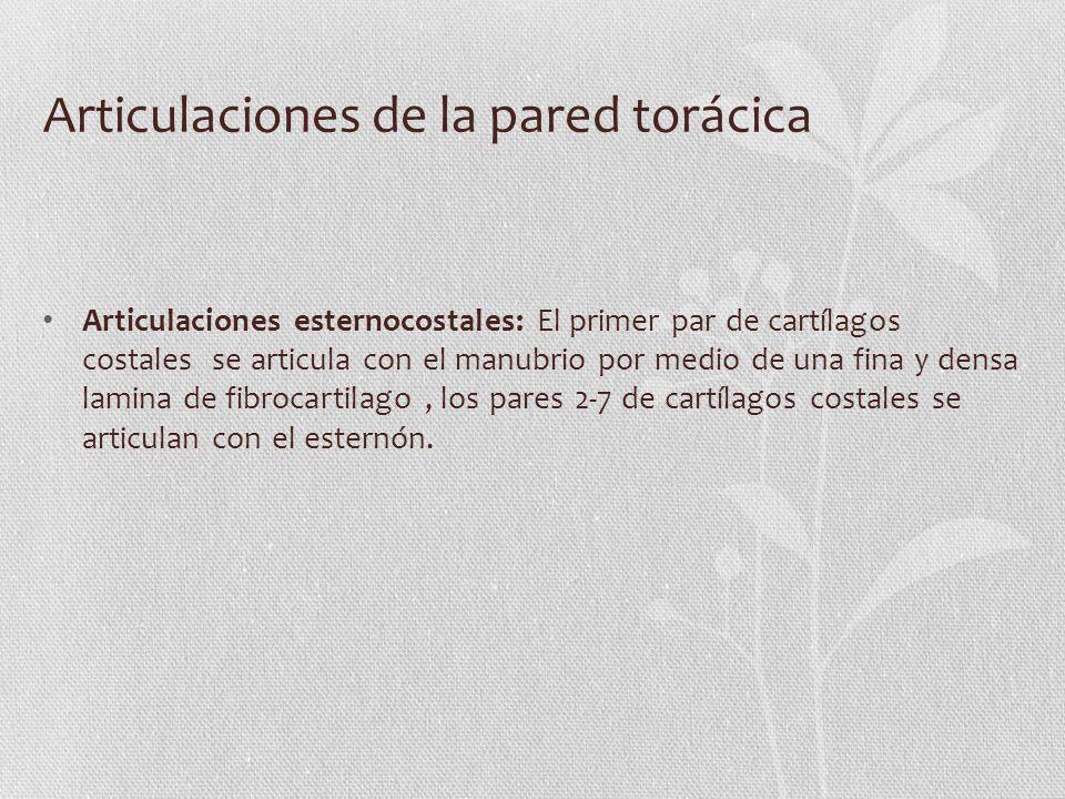 Articulaciones de la pared torácica Articulaciones esternocostales: El primer par de cartílagos costales se articula con el manubrio por medio de una