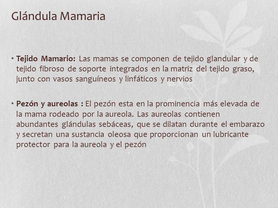Glándula Mamaria Tejido Mamario: Las mamas se componen de tejido glandular y de tejido fibroso de soporte integrados en la matriz del tejido graso, ju
