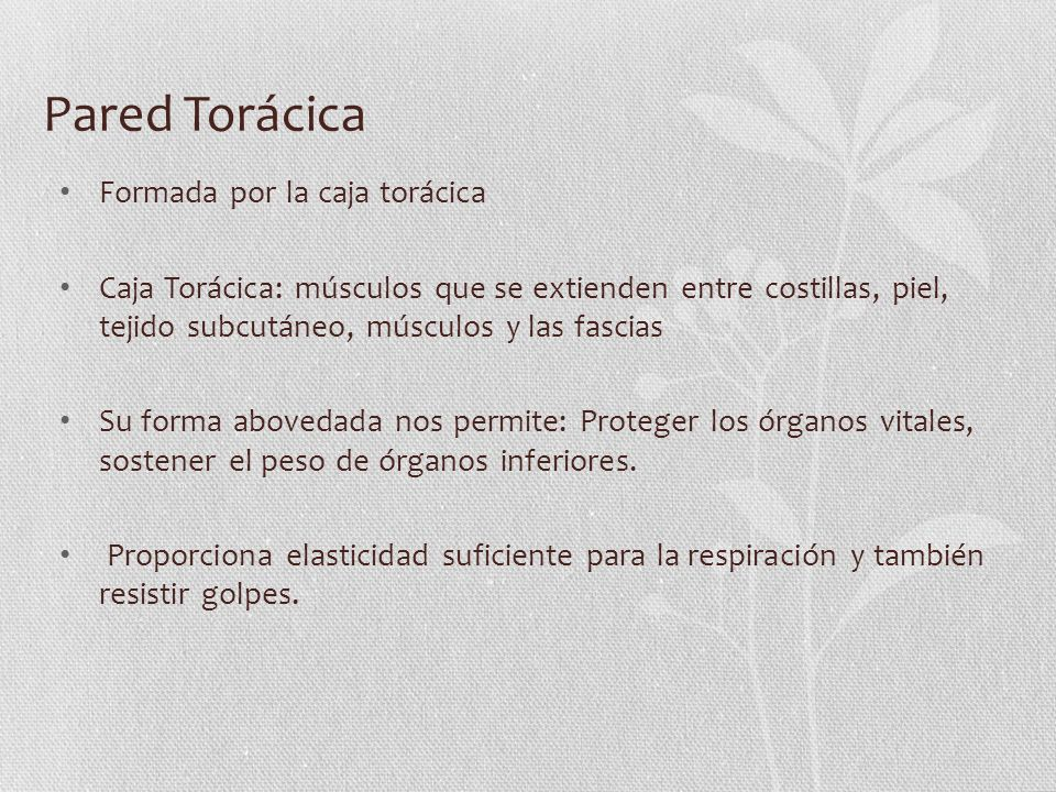 Pared Torácica Formada por la caja torácica Caja Torácica: músculos que se extienden entre costillas, piel, tejido subcutáneo, músculos y las fascias
