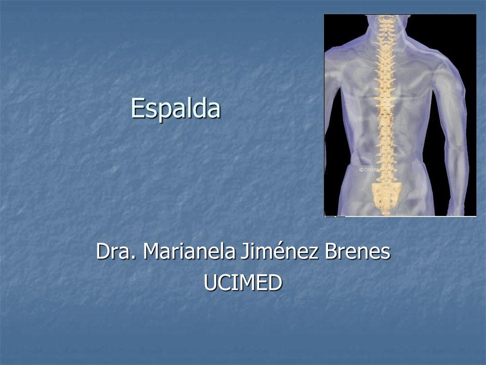 Columna Vertebral La columna comprende cuatro porciones: La columna comprende cuatro porciones: 7 vértebras cervicales 7 vértebras cervicales 12 vértebras torácicas 12 vértebras torácicas 5 vértebras lumbares 5 vértebras lumbares 9 vértebras pelvianas soldadas para formar el sacro y el cóccix.