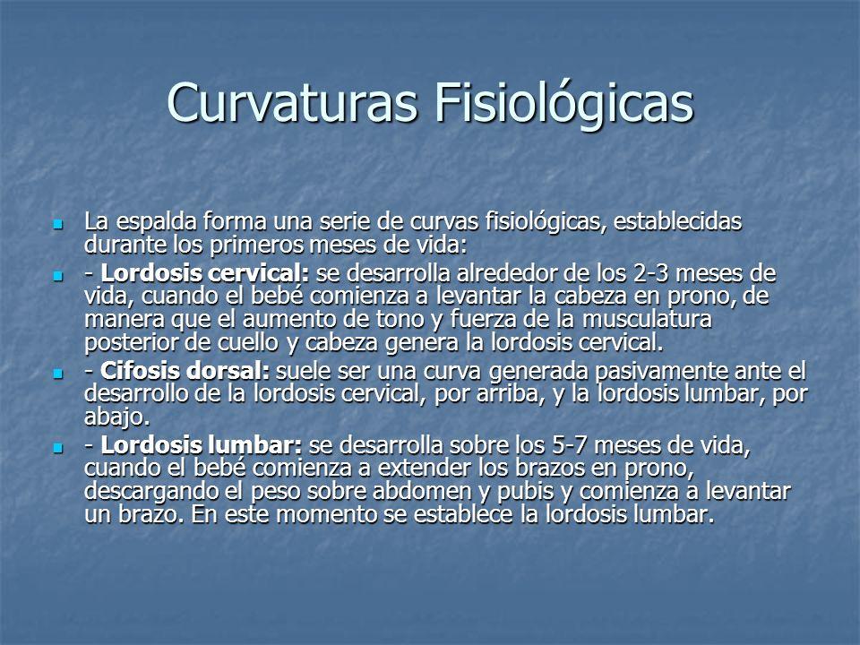 Curvaturas Fisiológicas La espalda forma una serie de curvas fisiológicas, establecidas durante los primeros meses de vida: La espalda forma una serie