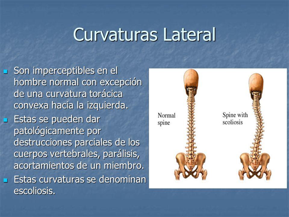 Curvaturas Lateral Son imperceptibles en el hombre normal con excepción de una curvatura torácica convexa hacia la izquierda. Son imperceptibles en el