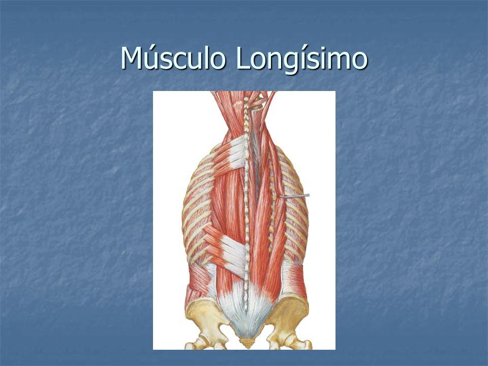 Músculo Longísimo