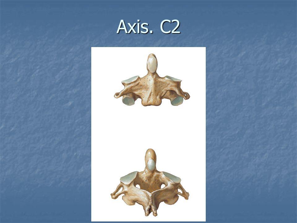 Vértebras Cervicales. C1-C4