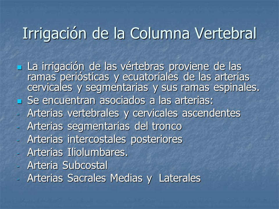 Irrigación de la Columna Vertebral La irrigación de las vértebras proviene de las ramas periósticas y ecuatoriales de las arterias cervicales y segmen