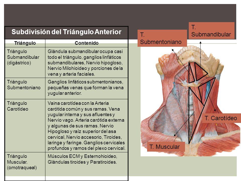 Subdivisión del Triángulo Anterior TriánguloContenido Triángulo Submandibular (digástrico) Glándula submandibular ocupa casi todo el triángulo, gangli