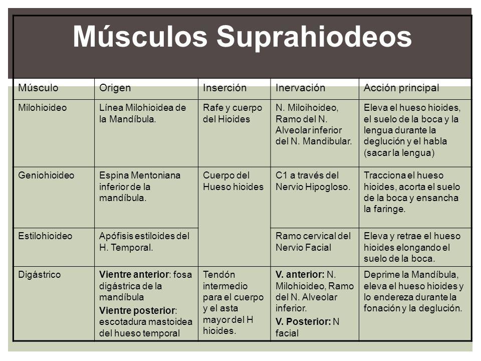 Músculos Suprahiodeos MúsculoOrigenInserciónInervaciónAcción principal MilohioideoLínea Milohioidea de la Mandíbula. Rafe y cuerpo del Hioides N. Milo