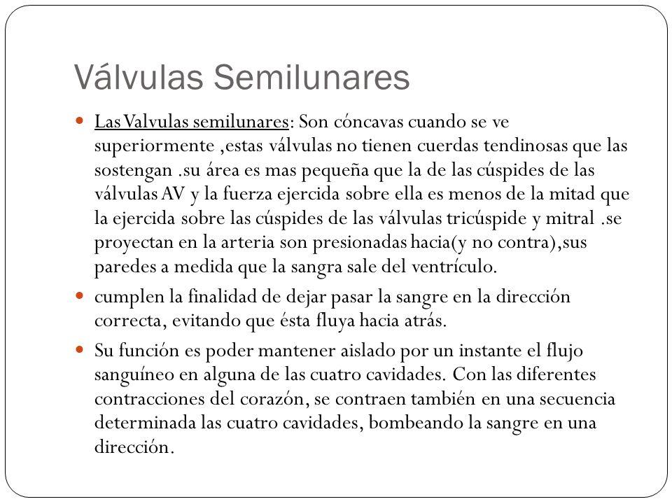 Válvulas Semilunares Las Valvulas semilunares: Son cóncavas cuando se ve superiormente,estas válvulas no tienen cuerdas tendinosas que las sostengan.s