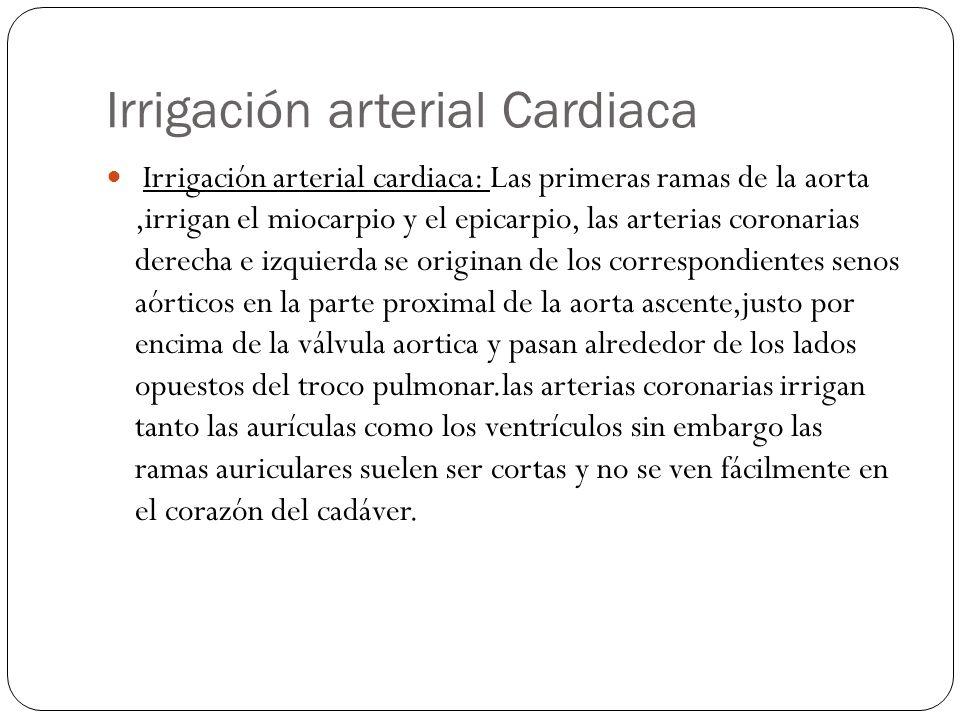 Irrigación arterial Cardiaca Irrigación arterial cardiaca: Las primeras ramas de la aorta,irrigan el miocarpio y el epicarpio, las arterias coronarias