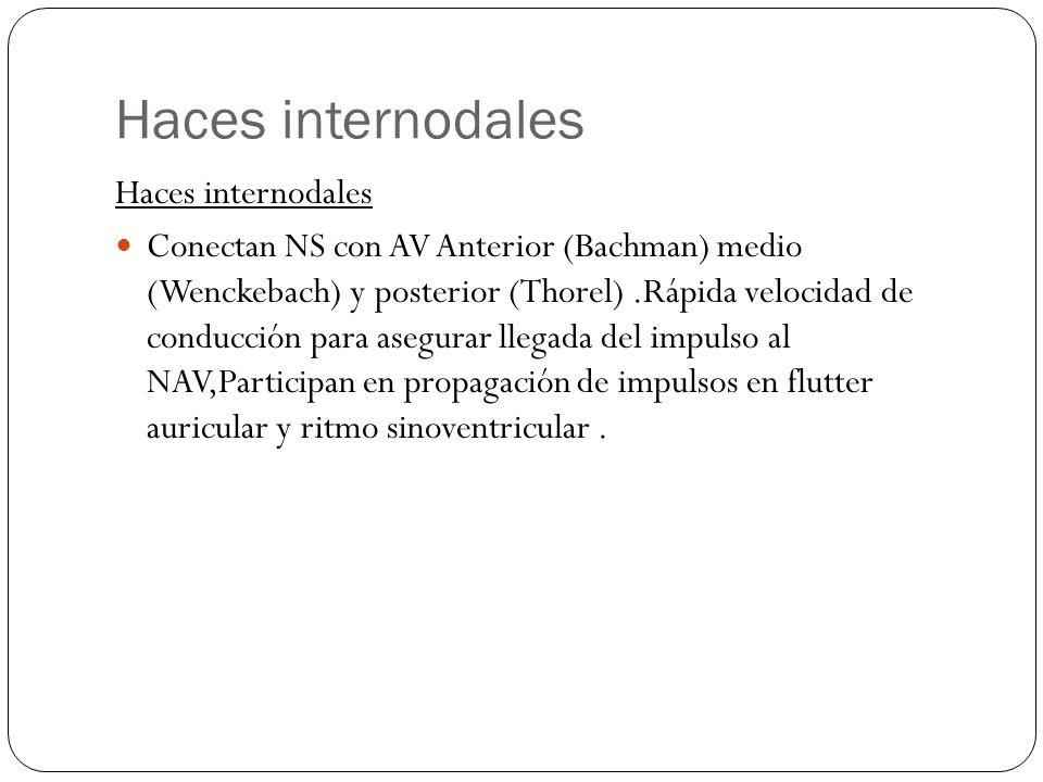 Haces internodales Conectan NS con AV Anterior (Bachman) medio (Wenckebach) y posterior (Thorel).Rápida velocidad de conducción para asegurar llegada