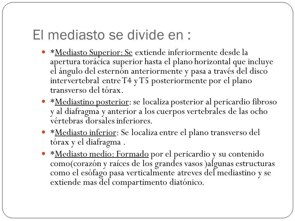El mediasto se divide en : *Mediasto Superior: Se extiende inferiormente desde la apertura torácica superior hasta el plano horizontal que incluye el