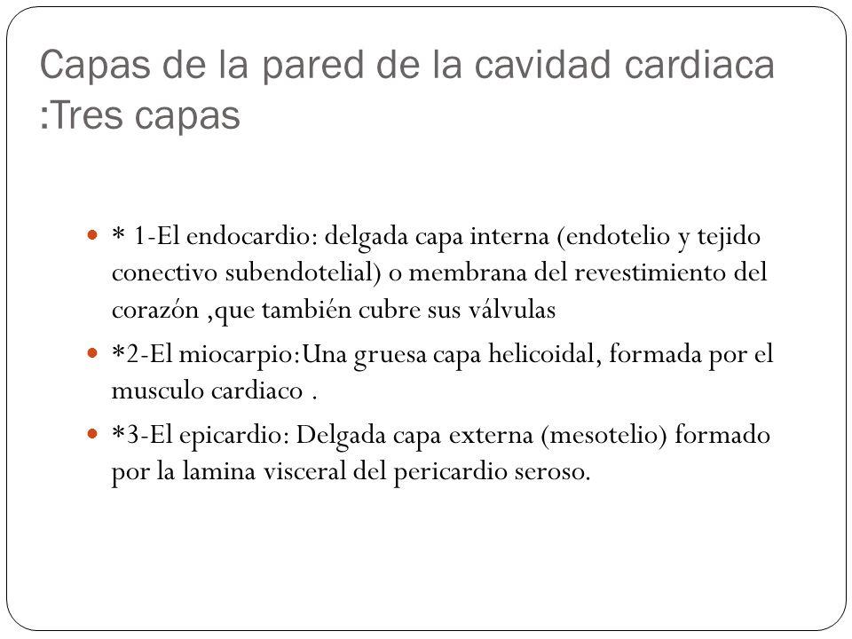 Capas de la pared de la cavidad cardiaca :Tres capas * 1-El endocardio: delgada capa interna (endotelio y tejido conectivo subendotelial) o membrana d