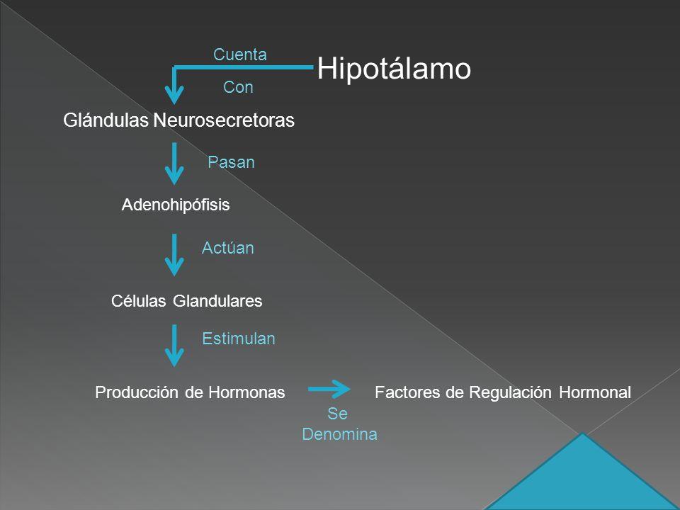Glándulas Neurosecretoras Adenohipófisis Células Glandulares Factores de Regulación HormonalProducción de Hormonas Pasan Actúan Estimulan Se Denomina