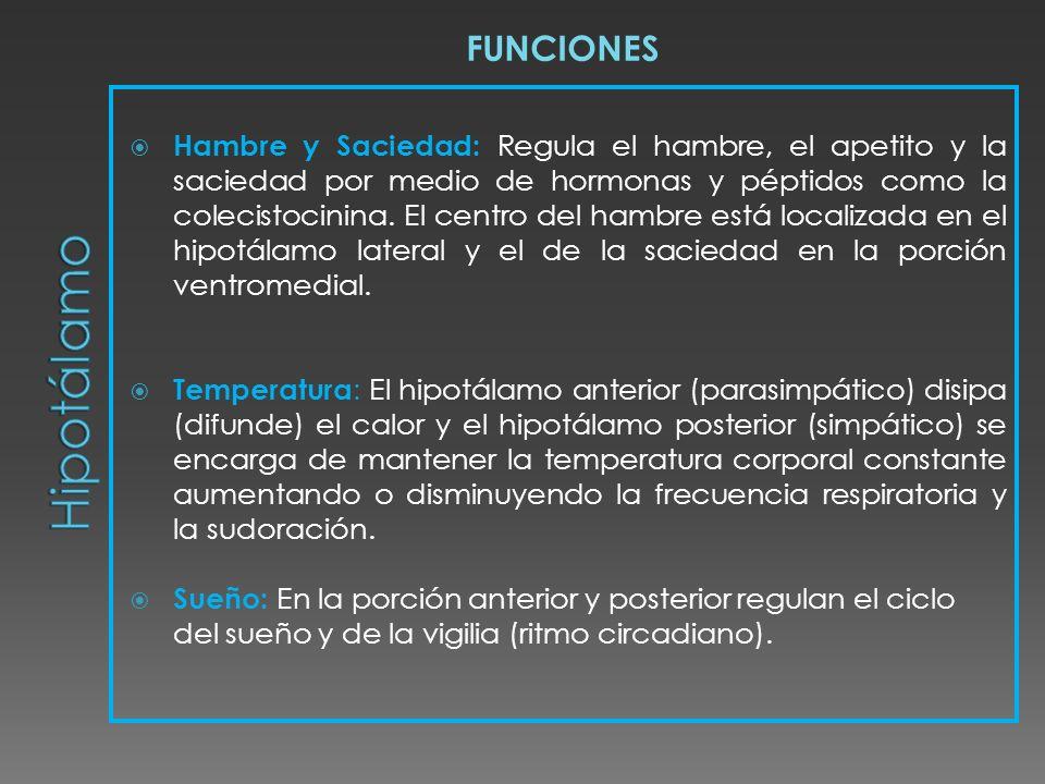 FUNCIONES Hambre y Saciedad: Regula el hambre, el apetito y la saciedad por medio de hormonas y péptidos como la colecistocinina. El centro del hambre