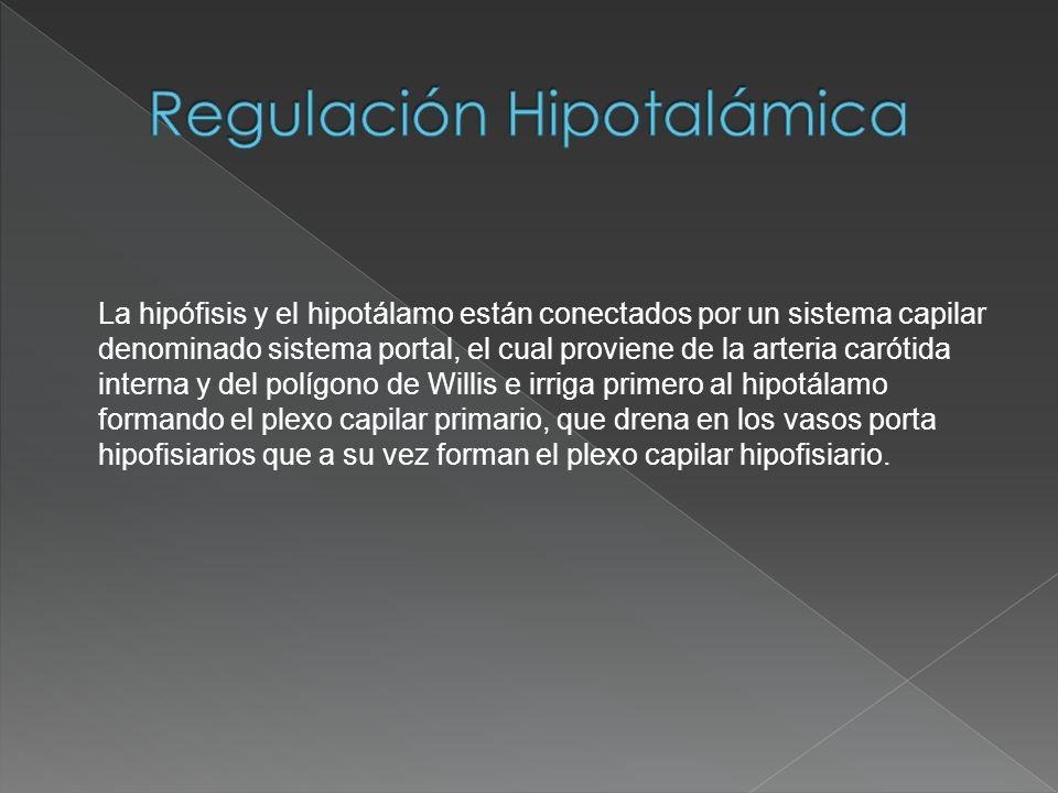 La hipófisis y el hipotálamo están conectados por un sistema capilar denominado sistema portal, el cual proviene de la arteria carótida interna y del