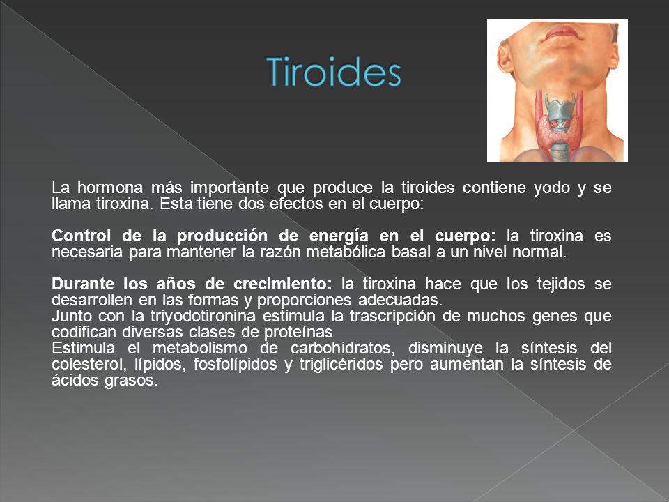 La hormona más importante que produce la tiroides contiene yodo y se llama tiroxina. Esta tiene dos efectos en el cuerpo: Control de la producción de